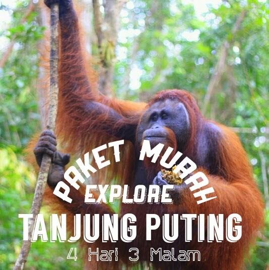 Paket Wisata Tanjung Puting