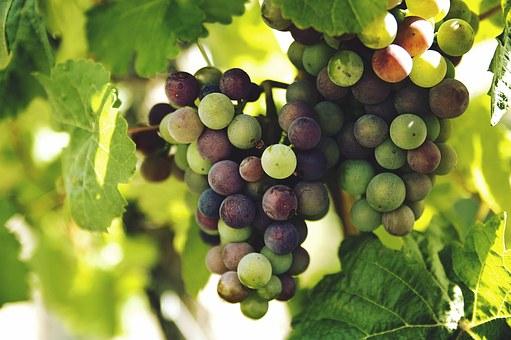 Dibalik Rasanya yang Lezat, Inilah 10 Khasiat Kesehatan dari Buah Anggur