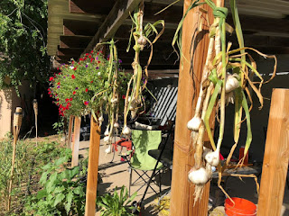 Garlic heads tied together and hanging from patio with colorful flowers