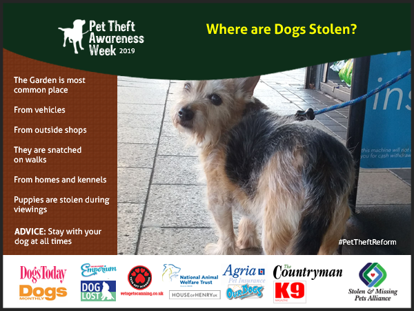 The most likely place for your dog to be stolen is from your garden