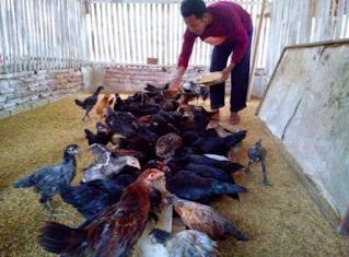 ruang lingkup kewirausahaan ini mencakup semua usaha dalam sektor peternakan. Misalnya saja usaha pengem-bangbiakkan burung atau unggas, dan ada juga usaha peternakan bangsa binatang menyusui seperti kambing dan sapi