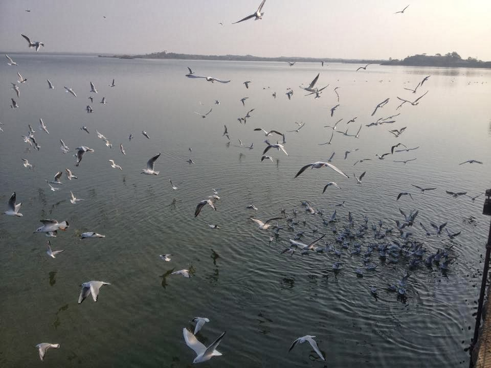 wonderful image of flamingo birds at rajkot