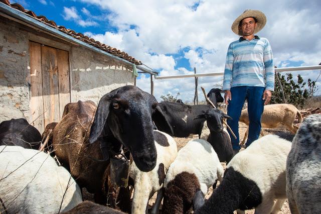 Caprinos, ovinos e pesca artesanal são destaques do Rural Produtivo na TVE