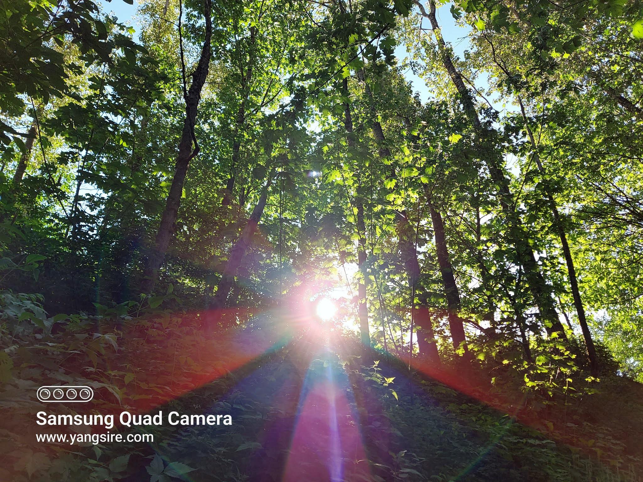 Forest that sun sunshine through it