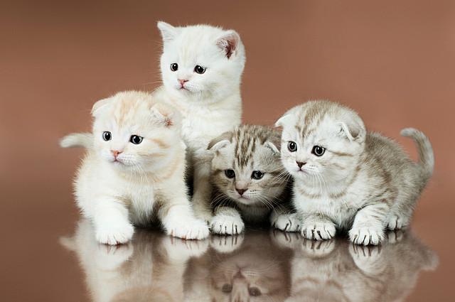 Retro Koty I Pies Co Warto Wiedzieć O Kocich Uszach