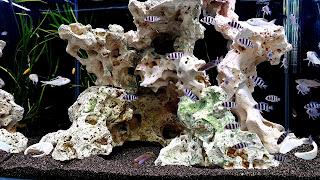 Community Fish Aquarium 4K HD Wallpaper