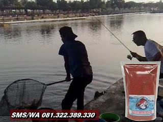 Umpan Ikan Mas Tombro Khusus Galatama