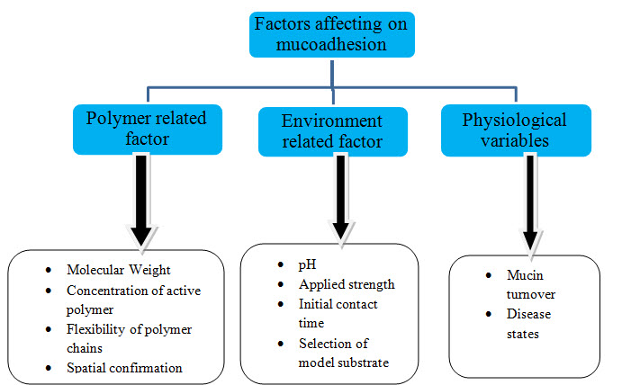 Fig. 6: Factors affecting mucoadhesion