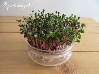 germogli di ravanello rosa