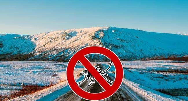 Nyamuk Tidak Bisa Hidup dan Berkembang Biak di Islandia