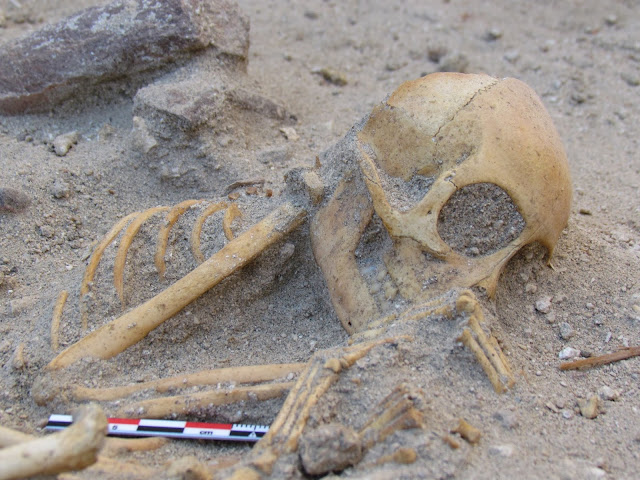 Monkeys buried like 'sleeping babies' were imported to ancient Egypt from India as pets