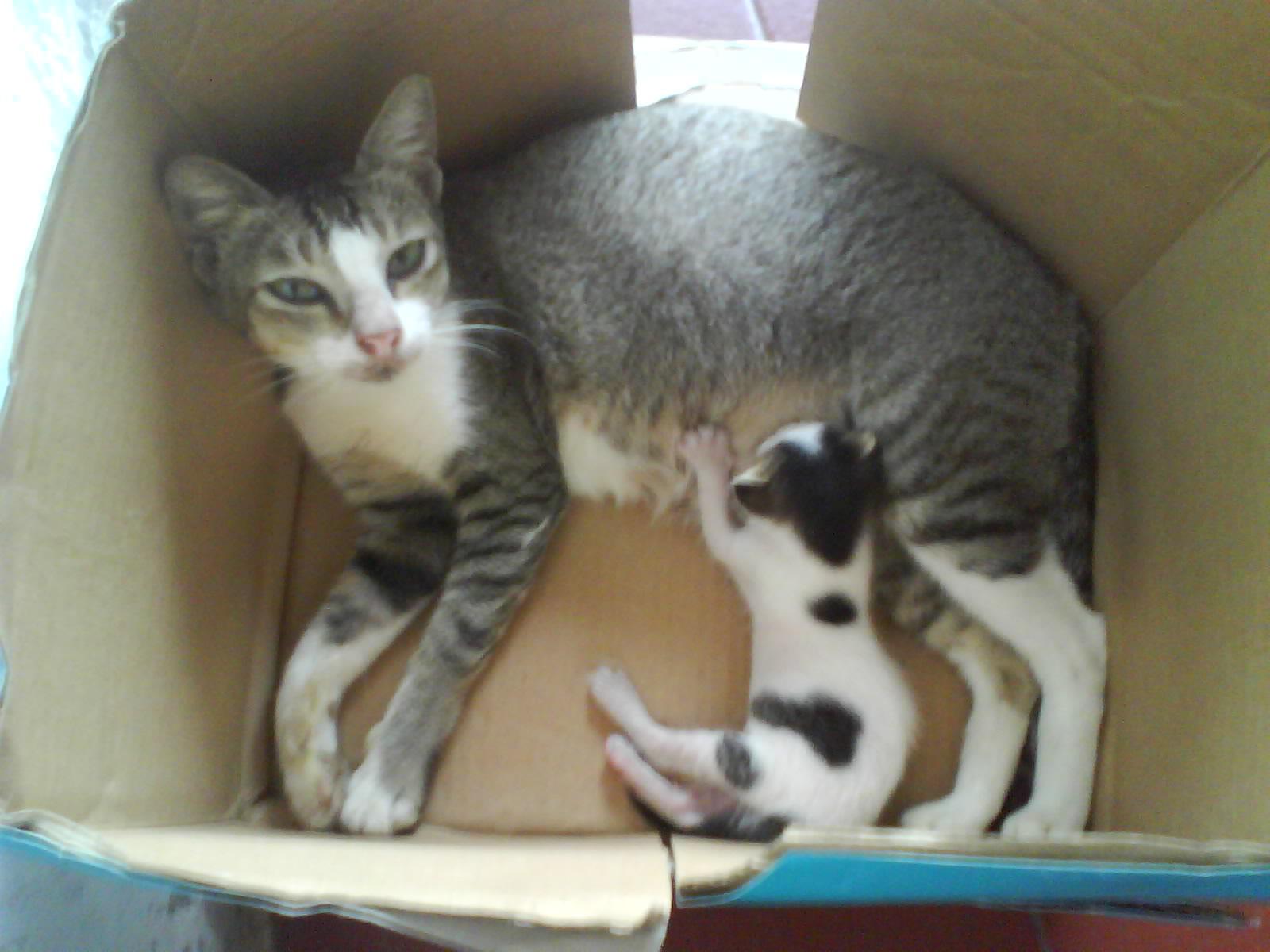 Agar Induk Kucing Tidak Membawa Anaknya Pindah Pindah Rumah