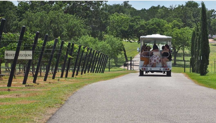 wine shuttle Frederickburg