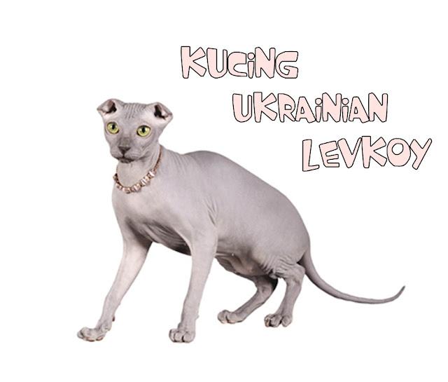 Kucing Ukrania