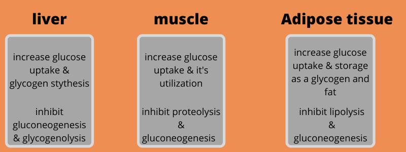 mechanism-of-action-insulin