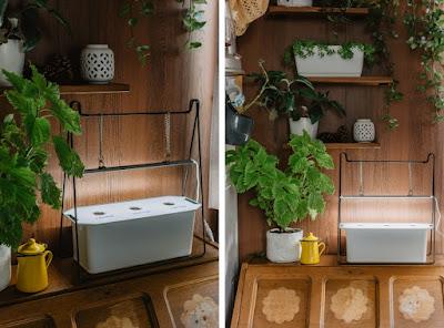 uprawa hydroponiczna skrzynka nelson garden