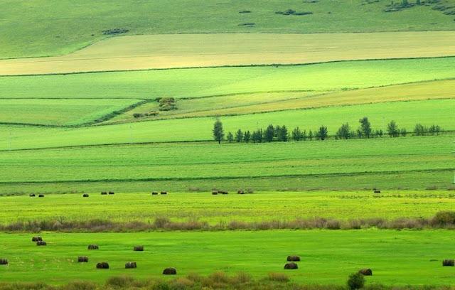 Thảo nguyên Hulun Buir