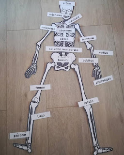 Atelier autonome sur le squelette