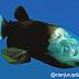 Barreleyes Fish, ikan aneh dan unik dari lautan