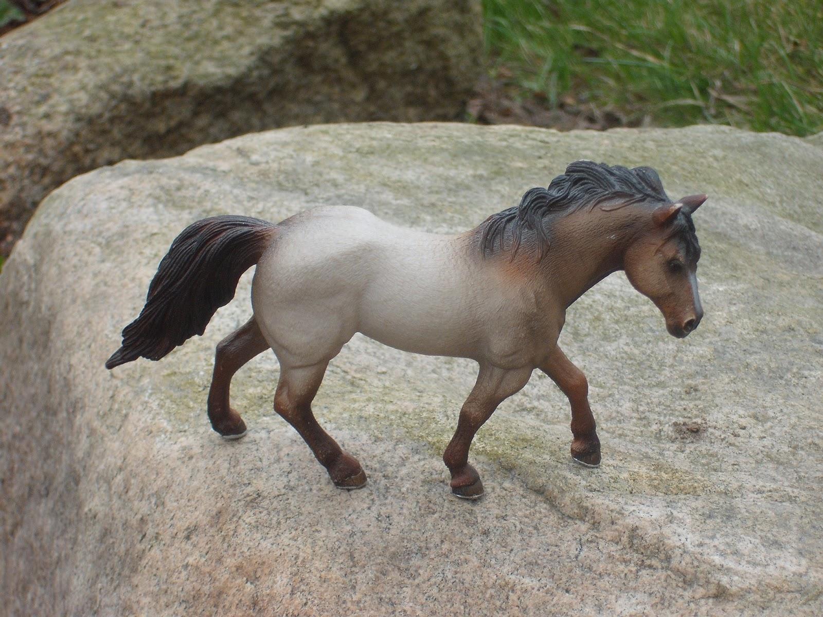 Konie I Kuce Maja 2013