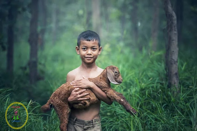 Nepalma Paline Bideshi jatka bakhraharu - Foreign goats raised in Nepal