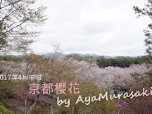 2017年4月上中旬京都櫻花速報+京都賞櫻心得