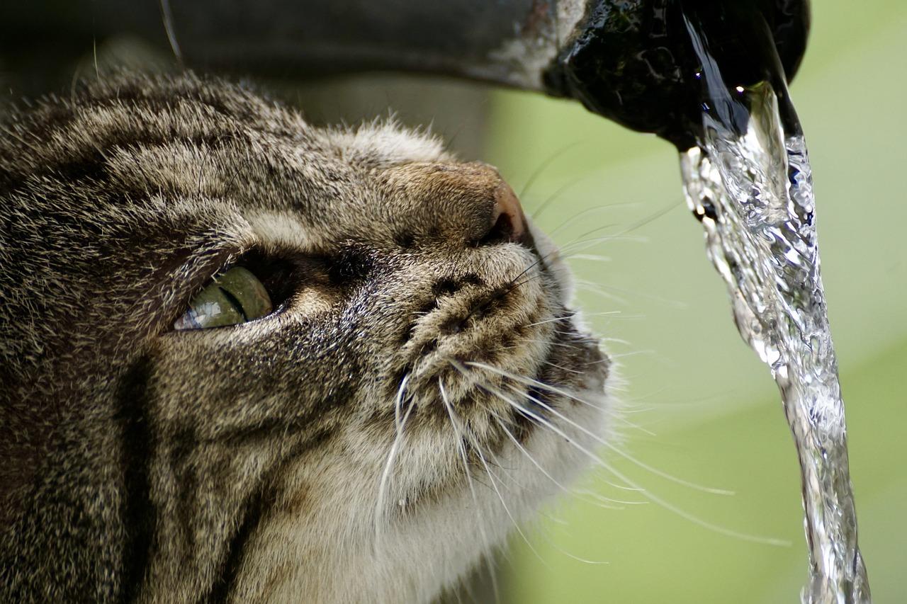 Mon chat ne boit pas d'eau, que puis-je faire?