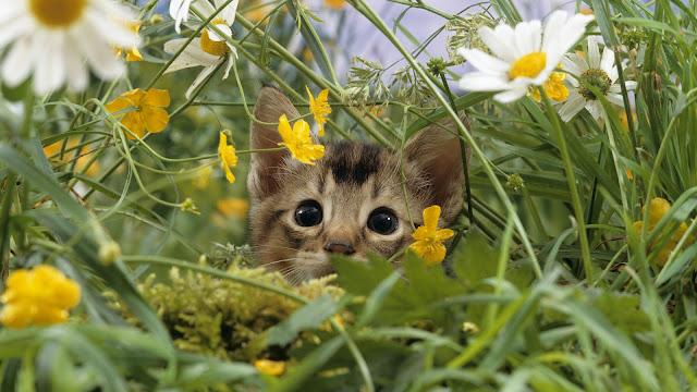 Kat verstopt in het struikgewas