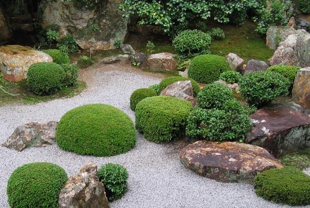 Самшит в японском саду