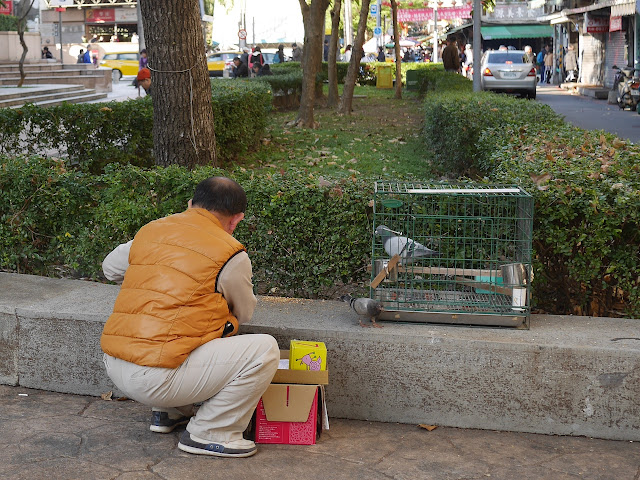 man with two pigeons, one in a cage
