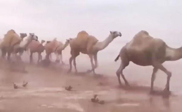 Insólitas lluvias cubren el desierto de Arabia Saudita; el fin se acerca