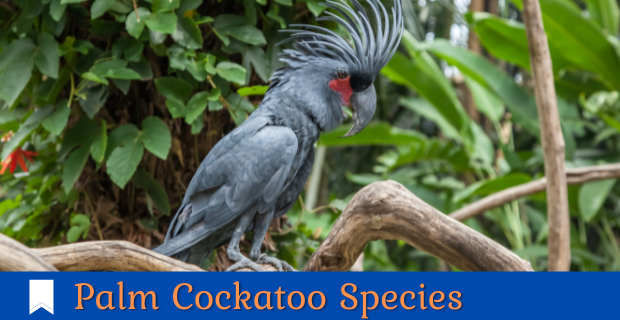 All Cockatoo Species