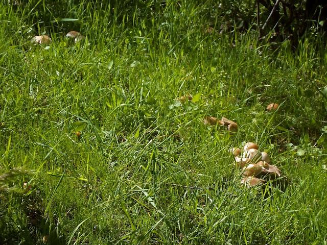 Грибы в Таджикистане. Переход с верхней Чайки в ущелье Оджук, тренировка, грибы, Варзоб, горы Таджикистана - фото-обзор похода