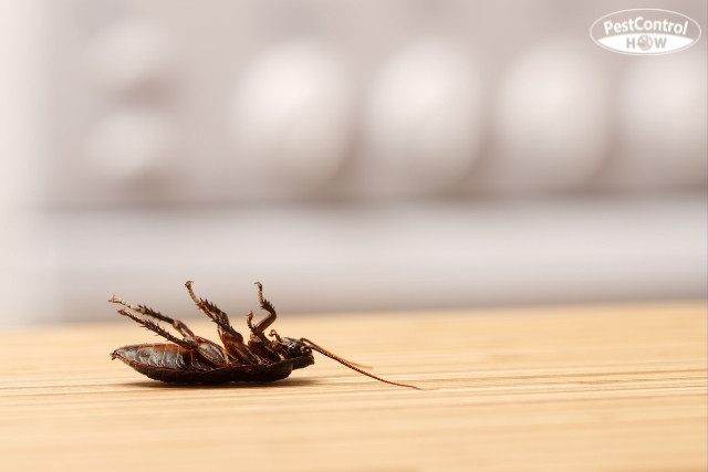 how-to-get-rid-of-cockroaches-in-apartments