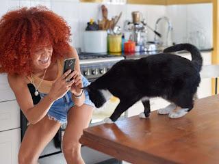 Tu gato odia en secreto que le tomen fotos constantemente