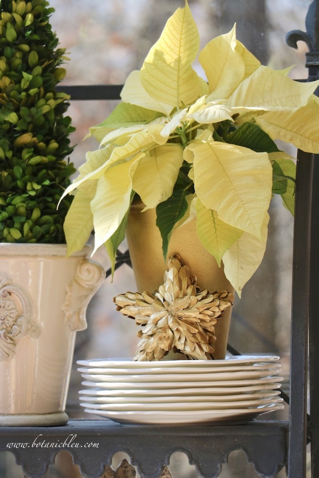 Create a beautiful Christmas look on a French Country plate stand in an instant with a white poinsettia
