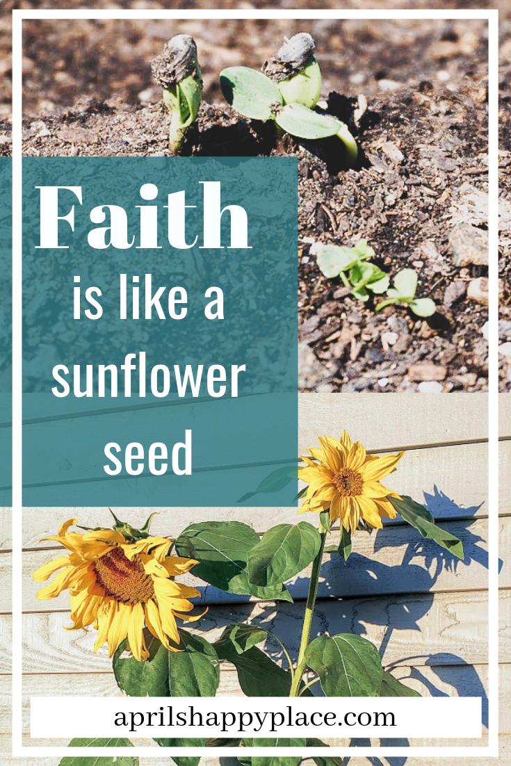 Faith is like a sunflower seed