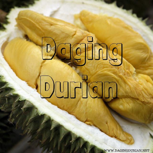 distributor-daging-durian-medan-yang-tiada-duanya-di-muaradua