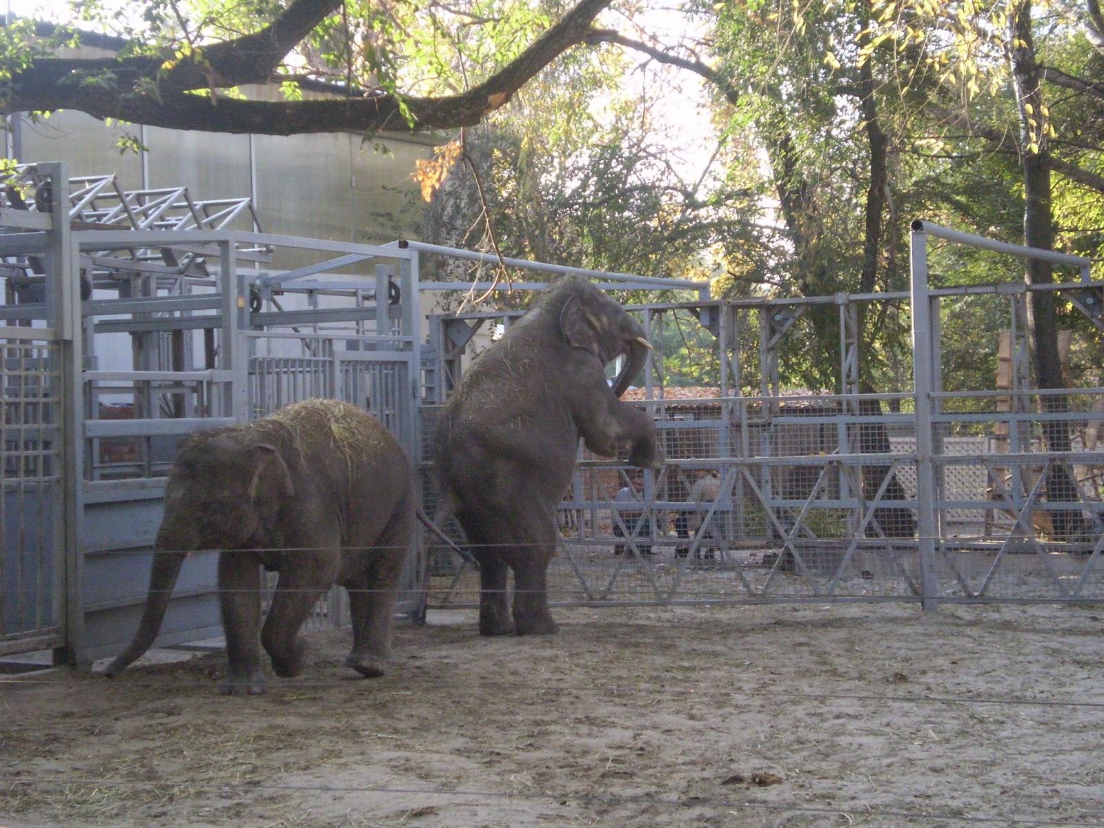 Слон-в-Ростове-на-Дону