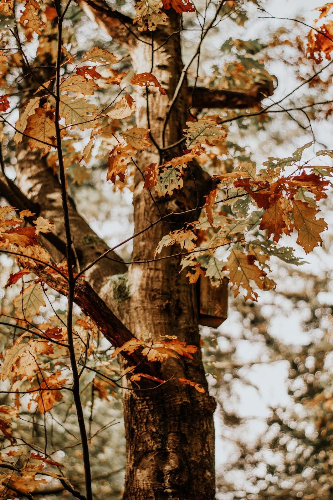 AUTUMN MORNING ROUTINE 2019 | ANNA TWENTY SEVEN | WALK IN THE FOREST