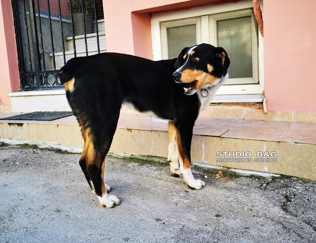 Ναύπλιο: Μήπως χάσατε τον σκύλο σας