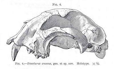 Dinaelurus skull