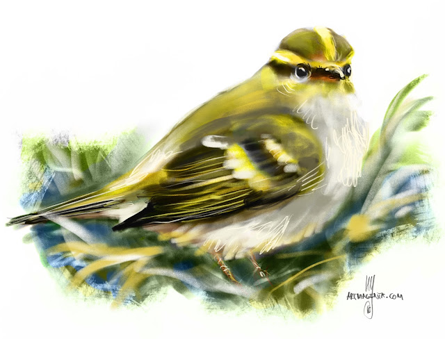 Yellow-browed warbler bird painting by Artmagenta