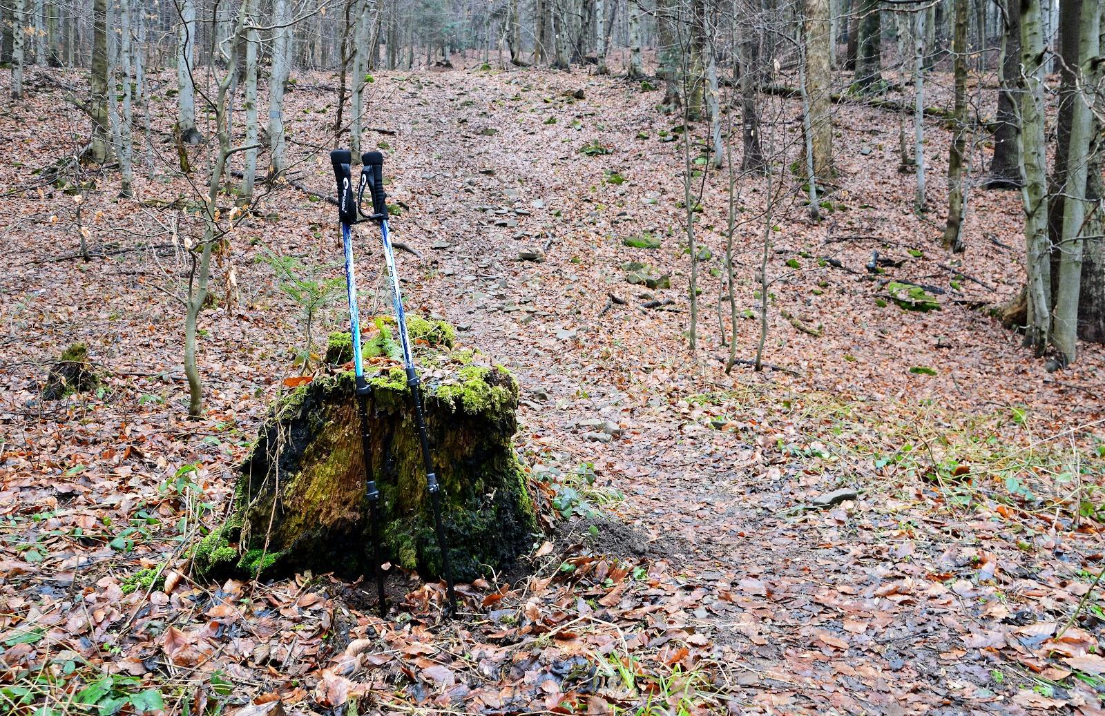 Kije trekkingowe Szlak na Lackową