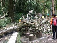 Empat  Wisatawan Tlogo Muncar Kaliurang Tertimpa Pohon Satu Meninggal
