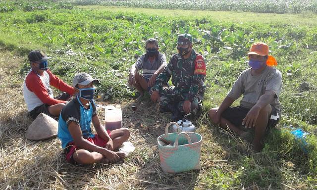 Pecahkan Masalah Pertanian Babinsa Koramil ceper Beri Masukan Ke Petani