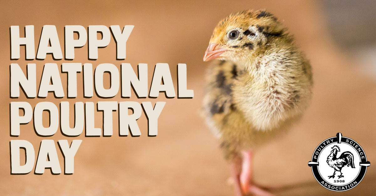 National Poultry Day Wishes Lovely Pics