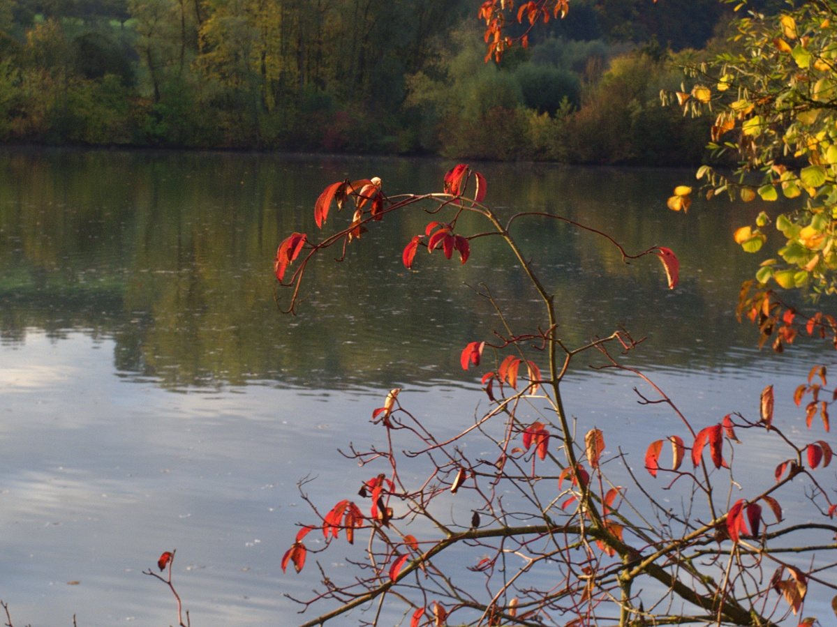 #297 Pentax 03 Toy Lens Telephoto f5.6 3.2mm – Herbstimpressionen am Aileswasensee (1)