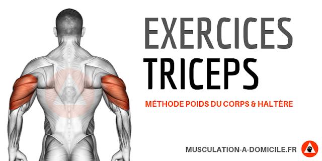 musculation à domicile exercices musculation triceps poids de corps haltère