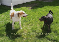 Friendly dogs Valentino and Penny
